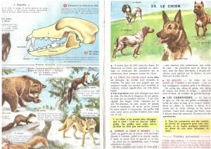 leçon de choses chien CM1