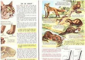 page chat leçon de chose